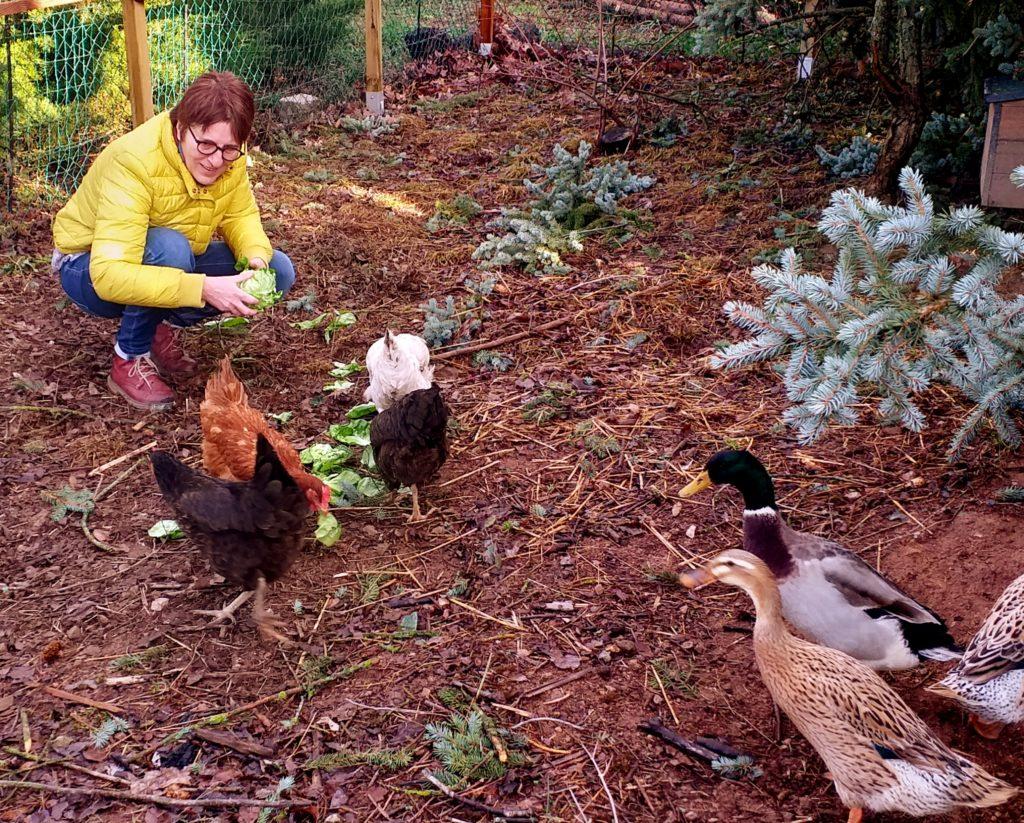 Garde et visite d'animaux à domicile en saône et loire : poules, canards, cochons d'inde...